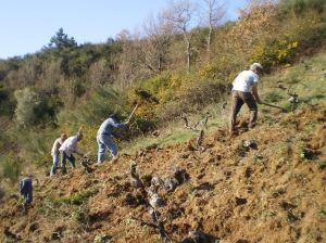 Viticultores en A Trabe, casi escalando