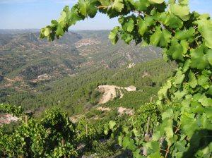 También quiero dejar una imagen bonita porque yo conservo el optimismo. Quiero contar el vino sin estridencias. Por cierto, es una vista de la finca Espectacle, en Montsant (Tarragona) Precioso, ¿verdad?