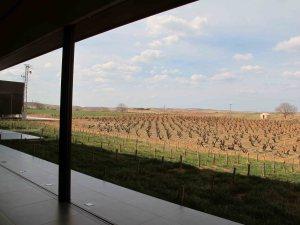 Esta viña que se ve desde dentro de la bodega fue una de las primeras que tenía la familia Rodero