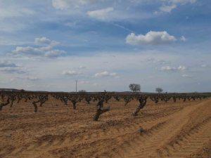 Bonito el paisaje de viña de Capellanes, ¿no?