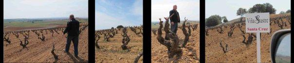 Estos son algunas de las viñas que Jesús nos enseñó. Los carteles indican el nombre de los viñedos