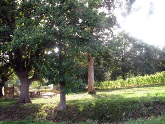 Esta es una de las vistas del viñedo de Itsasmendi. ¿A que apetece llevarse el mantel de cuadros y sentarse a merendar en los bancos de la izquierda?