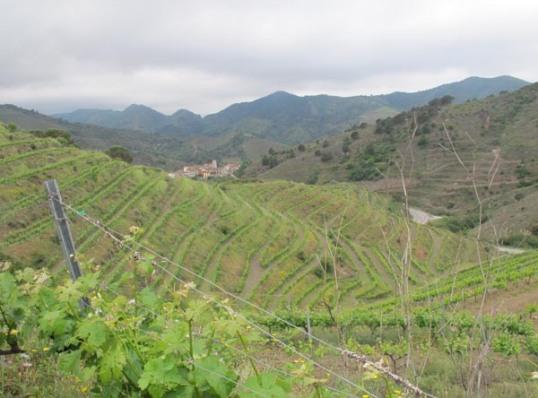 """Esta foto es un paisaje del Priorat cualquiera... no es la finca """"Els Escurçons"""" pero el vino me hacía viajar hasta aquí a cada sorbo."""